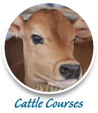 cattle training agricultural courses consulting
