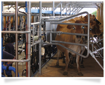 dairy consulting dairy farming training agricultural consulting