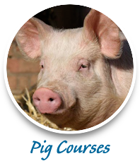 pig training agricultural courses consulting